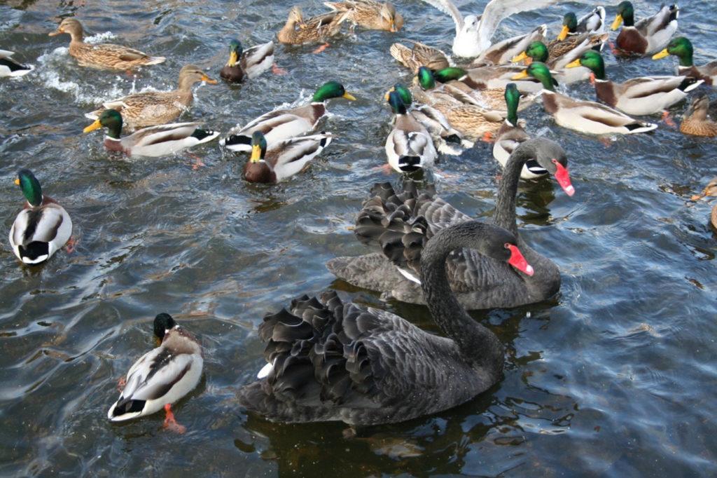 2009-des-05-bryne-fugler-og-kunst-2