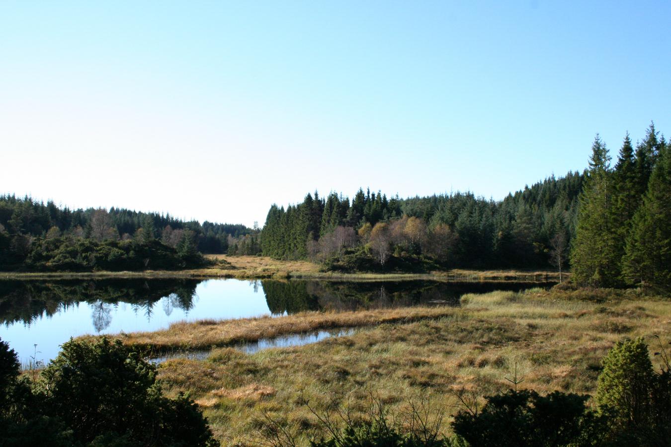 2016-okt-11-saetre-lometjorna-16