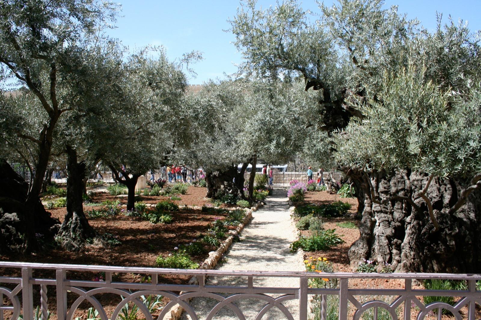 2008-Mars-18 Getsemane i Jerusalem-2