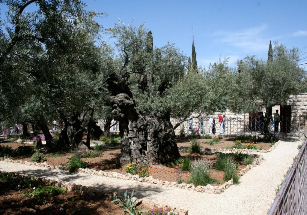 2008-Mars-18 Getsemane i Jerusalem-3